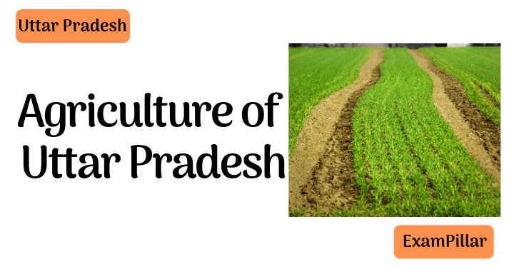 Agriculture of Uttar Pradesh